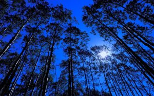 380195__forest-at-night_p